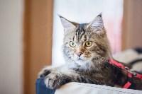 Международная выставка кошек. 16-17 апреля 2016 года, Фото: 12