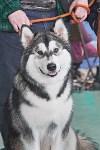 Выставка собак в Туле 26.01, Фото: 63