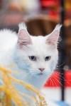 Выставка кошек в МАКСИ, Фото: 72