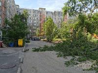 вырубка деревьев во дворе дома №33 по ул. Горького в Туле, Фото: 2