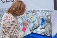 Выставка кошек в Туле, Фото: 41
