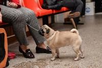 """Выставки собак в ДК """"Косогорец"""", Фото: 57"""