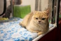 Пряничные кошки, Фото: 56