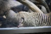 Тульский экзотариум: животные, Фото: 38