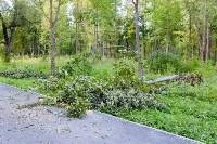 В Баташевском саду из-за непогоды упали вековые деревья, Фото: 1