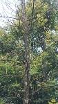 В Мясново погибает лес, Фото: 2