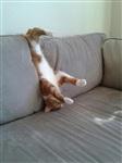 Кошки и собаки, проигравшие битву с мебелью, Фото: 21