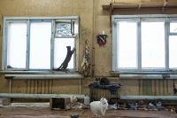 Волонтеры спасли кошек из адской квартиры, Фото: 9