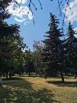 В Туле гибнут деревья, Фото: 2