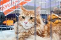 Выставка кошек в МАКСИ, Фото: 1