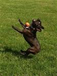 Забавные собаки, Фото: 4