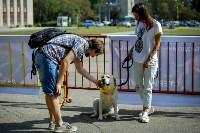 В Центральном парке Тулы проходит фестиваль помощи животным, Фото: 14
