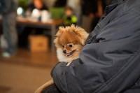Выставка собак в Туле, 29.11.2015, Фото: 73