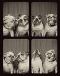 Собаки в фотобудке, Фото: 1