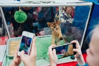 """Выставка """"Пряничные кошки"""" в ТРЦ """"Макси"""", Фото: 58"""