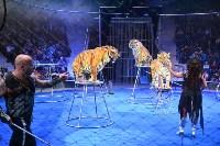 Цирковое шоу, Фото: 132