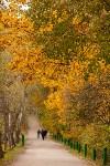 Золотая осень в Туле-2019, Фото: 87