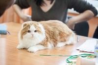 В Туле прошла выставка «Пряничные кошки» , Фото: 9