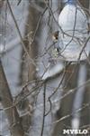 Зимняя сказка Платновского парка, Фото: 24