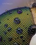 Глаз крошечной мухи с каплями росы, Фото: 12