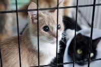 III благотворительный фестиваль помощи животным, Фото: 6