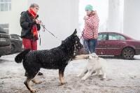 Всероссийская выставка собак 2017, Фото: 57
