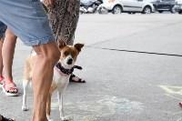 В тульском «Макси» прошел благотворительный фестиваль помощи животным, Фото: 2