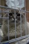 В Туле прошла международная выставка кошек, Фото: 5