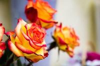 Ассортимент тульских цветочных магазинов. 28.02.2015, Фото: 32