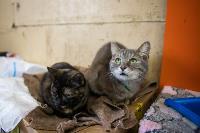 Волонтеры спасли кошек из адской квартиры, Фото: 33