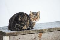 Тульские котики, Фото: 39