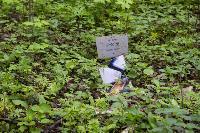 Кладбище домашних животных в Туле, Фото: 30