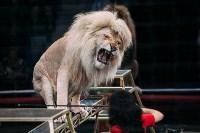 Львы Африки приехали в Тулу, Фото: 111