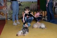 Выставка собак DogLand, Фото: 33