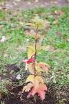 Тульская городская УК сажает деревья, Фото: 13