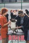 Выставка собак в Туле 26.01, Фото: 53