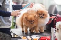 Выставка собак в Туле, 29.11.2015, Фото: 7