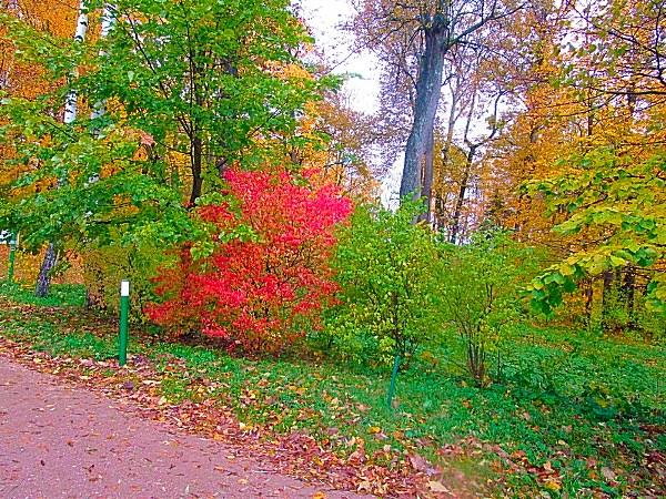 Краски осени, в Ясной поляне