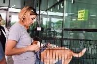 В тульском «Макси» прошел благотворительный фестиваль помощи животным, Фото: 45