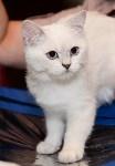 Выставка кошек в Искре, Фото: 86