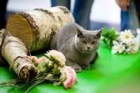 Выставка кошек. 4 и 5 апреля 2015 года в ГКЗ., Фото: 9