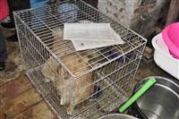 Похищенные собаки, Фото: 3
