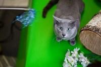 Выставка кошек. 4 и 5 апреля 2015 года в ГКЗ., Фото: 130