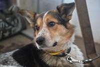 Праздник северных собак на Куликовом поле , Фото: 119