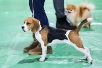 Выставка собак в Туле 14.04.19, Фото: 48
