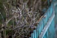 Весна 2020 в Туле: трели птиц и первые цветы, Фото: 38