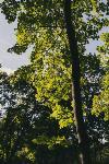 Летний день в богородицком парке, Фото: 12