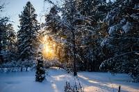 Снежное Поленово, Фото: 30