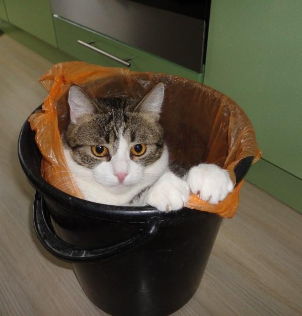 У модного кота и пакетик в цвет глаз!!!