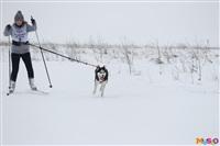 Куликово поле. Гонки на собачьих упряжках., Фото: 65